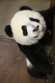 2011 03 12 Zoo Madrid - De De 010 | Flickr - Photo Sharing!