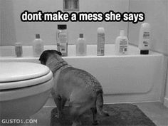 #blackandwhite #gifs #puppy #lol
