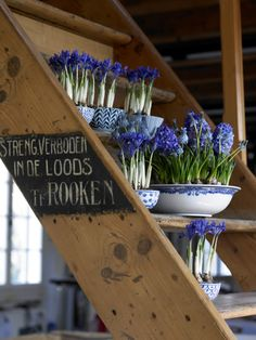 Cut grape hyacinth from my flower bed and use for cheese party. Need mini vases