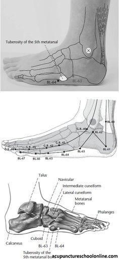 BL-64 Capital Bone JINGGU -1