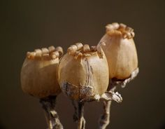 Seed heads | Bogger3.