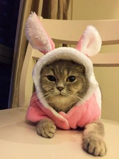 #cat Crazy Cat Lady, Crazy Cats, I Love Cats, Cute Cats, Easter Cats, Happy Easter, Funny Animals, Cute Animals, Here Kitty Kitty