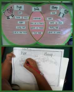 Venn diagram comparing and contrasting two farm animals. Effective tool to assess background information and teach new facts about topics that fit into the farm theme. This activity can be done with animals, farm tools, crops and plants, etc. Farm Activities, Classroom Activities, Preschool Ideas, Summer School Themes, Farm Unit, Farm Projects, Teaching First Grade, Plant Science, Kindergarten Science