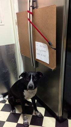 Dog Shaming -- I learned to dispense water & ice.