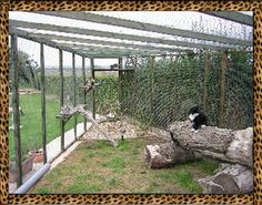 Cool cat enclosures keep kitties safe outdoors     Google Image Result for http://www.nitewindes.com/CatteryOutsideCatRunInsideView.jpg