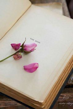 Have a book to put a flower from every place you travel to in and write notes about that day. (Could maybe add photos of the day)