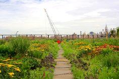 brooklyn grange green roof design