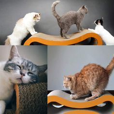 Olymstore Premium Cat Scratcher Lounge with Catnip,Corrugated Kitty Scratch cardboard Couch Scratching Pad Bed Claws Care Toy >>> Very nice of you to have dropped by to see the image. (This is our affiliate link) Heated Outdoor Cat House, Pet Dogs, Dog Cat, Cheap Pets, Cat Throw, Bed Pads, Cat Scratcher, Outdoor Cats, Cat Toys