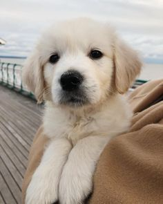 Uploaded by Find images and videos about dog, animals and puppy on We Heart It - the app to get lost in what you love. Cute Funny Animals, Cute Baby Animals, Animals And Pets, Easiest Dogs To Train, Cute Dogs And Puppies, Doggies, Retriever Puppy, Cute Animal Pictures, Fauna