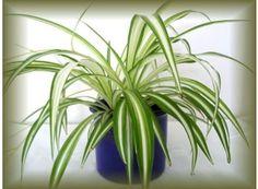 Logo Jaro apříprava pokojových rostlin