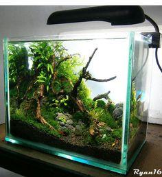 Akvaryum Kurarken Örnek Alabileceğiniz Bitkili Akvaryum Fotoğrafları #akvaryum…