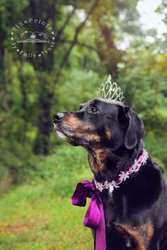 Our beautiful princess turned 7 today!! Happy Birthday Gia!! Mommy and daddy love you very much! ❤️❤️🐶🐾👑 📸FOLLOW MY PHOTOG PAGE on IG: @fineprintsbyemilytomas for more! #birthdaygirl #7years #furbaby #mygirl #love #happybirthday #monday #gorgeous #beutiful #blackbeauty #angel #stunning #blackdog #dog #doglover #lab #labrador #rottweiler #rottie #rottielab #labweiler #beauty #royal #tiara #photography #dogmodel #dogphotography #petphotography #fineprintsbyemilytomas
