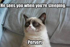 Grumpy cat humor, grumpy quotes, grumpy kitty, best grumpy cat ...For more hilarious jokes and humor pics visit www.bestfunnyjokes4u.com/rofl-funny-pic-of-the-day-8/