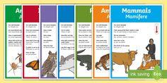 Animal Groups Display Posters English/Romanian - Animal Groups Display Posters - Animal, Display, Display Poster, Poster, Animal Poster, Animal Displ