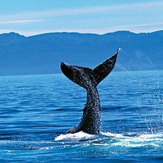 see the whales- Check!