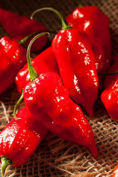 """chillypepperhothothot: """"Spicy Hot Bhut Jolokia Ghost Peppers by brent.hofacker on Flickr. """""""