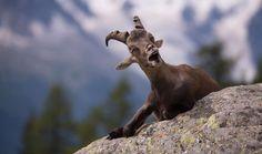 Premios de Fotografías de la Diversión de Vida Silvestre - Yuzuru Masuda/Comedy Wildlife Photography Awards