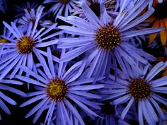 Different types of flowers with names, meanings and types of flowers with pictures