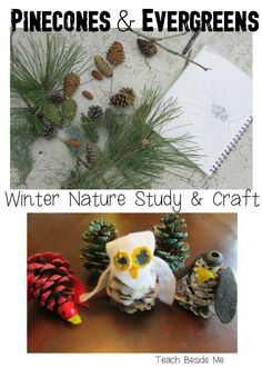Winter Nature study and craft idea with evergreens and pinecones. We made some pinecone birds!