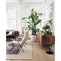 Check out those house plants | Indoor plants are a great way to decorate your minimalist space