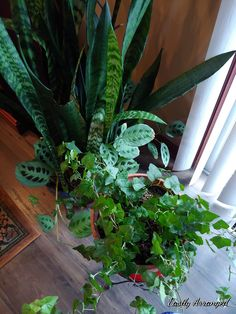 Ivy, Floral Design, Plants, Floral Patterns, Plant, Planets, Hedera Helix