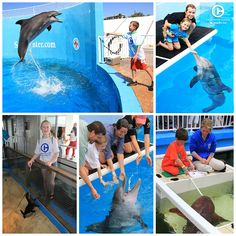 We offer many amazing animal encounter programs at Clearwater Marine Aquarium. Check them all out!
