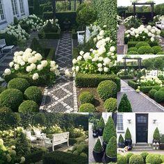 August in my white garden #annabelle #garden #instagardenlovers #haven #minhave #tuin #garten #hage #trädgård #jardin #photooftheday #gardenlove #boxwood #formalgarden