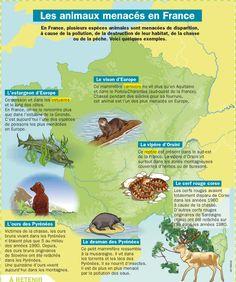 Fiche exposés : Les animaux menacés en France