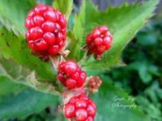 Gentle Joy Photography: Checking the Flowers and Berries