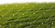 Grass Field, Grasses, Photoshop, Landscape, Image, Lawn, Scenery, Grass, Corner Landscaping