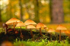 Pilze by Annette von Euw on 500px