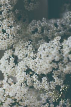 Flower Photography, Nature Photography, White Flowers, Still Life Photography by Claudia Casal // Hello Twiggs