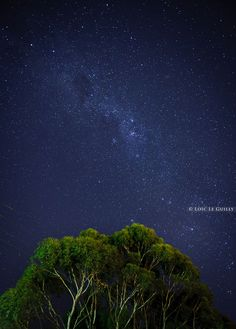 Milky way and eucalypts above Hobart, Tasmania