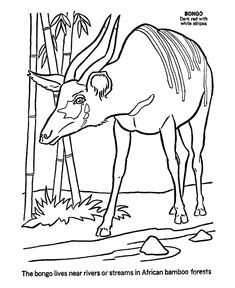 wild animal coloring page bongo coloring page