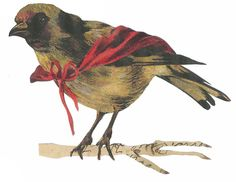 Victorian Bird Scrap
