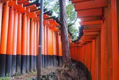 Kyoto, Fushimi Inari Taisha, Osaka, Travel, Orange Door, Viajes, Destinations, Traveling, Trips