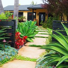 Large, stained concrete pavers lead through a dramatic CA garden to the front door. A low fence separates public space from private, makes front yard liveable. March '12 Sunset Magazine