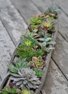 Sedum and Succulent Planters • Tips, Ideas and Tutorials! Including, from 'gardenista', this lovely succulent log planter.