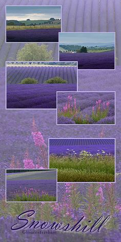 Lavender Fields at Snowshill by GethinThomas, via Flickr