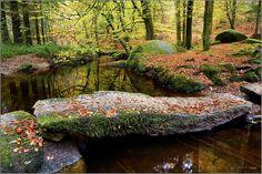 La Forêt d'Huelgoat, Finistère (France)