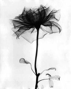sheer black flower