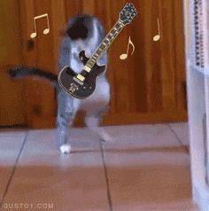 Eddie Van Halen Cat Shows You How It's Done (GIF - click for awesomeness)