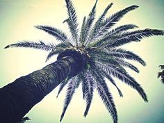 PALM TREEES I tried to climb it...I failed miserably but I got this cool pic!