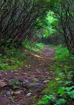 Hiking trail in the Pisgah National Forest in the North Carolina Mountains.