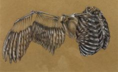 Ribcage and Wing Suzanne Hood (2013) pencil crayon on craft paper 11in × 17in × 1in Current Bid: $225.00  #art #Montreal  ARTBOMB: BUY WHAT YOU LOVE