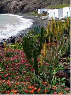 Playa los quemaos,de lava volcánica.Lanzarote