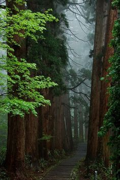 Mount Haguro, Yamagata, Japan - 25 Beautiful Places In Our Amazing World Forest Path, Tree Forest, Forest Trail, Misty Forest, Foggy Forest, Redwood Forest, Magical Forest, Beautiful World, Beautiful Places