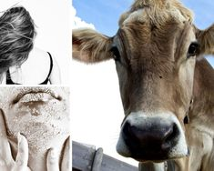 Casein is a common non vegan beauty product ingredient to watch out for! If you want to find out some more of the most common non vegan ingredients in your beauty products. Then click the link below! Cosmetics Industry, In Cosmetics, Vegan Beauty, Veganism, Beauty Products, How To Find Out, Cow, Weird, Watch