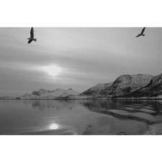 3/5 #blackandwhitechallenge I captured this photo on a spectacular cruise on the Norwegian coast, it was spectacular ~~~~~ 3/5 #retoblancoynegro hice esta foto en un crucero por la clara Noruega, fue increíble. Nominó al reto a @legatraveler pues quiero ver vuestro monstruo Come Destinos en blanco y negro :) #bnw_photografare #bw #bnw_sniper #blackandwhitephotography #bnw_universe #bnw_diamond #bw #bnw #monochromatic #wanderlust #ig_Norway #Europa #noiretblac #Norway #nature #wildplace