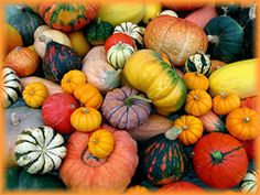 Photo of a colorful assortment of pumpkins taken by Melissa Lewis